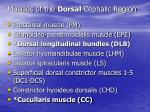 muscles of the dorsal cephalic region