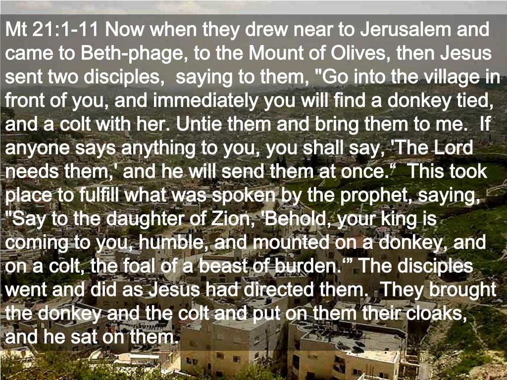 """Mt 21:1-11 Now when they drew near to Jerusalem and came to Beth-phage, to the Mount of Olives, then Jesus sent two disciples,  saying to them, """"Go into the village in front of you, and immediately you will find a donkey tied, and a colt with her. Untie them and bring them to me.  If anyone says anything to you, you shall say, 'The Lord needs them,' and he will send them at once.""""  This took place to fulfill what was spoken by the prophet, saying,  """"Say to the daughter of Zion, 'Behold, your king is coming to you, humble, and mounted on a donkey, and on a colt, the foal of a beast of burden.'"""" The disciples went and did as Jesus had directed them.  They brought the donkey and the colt and put on them their cloaks, and he sat on them."""