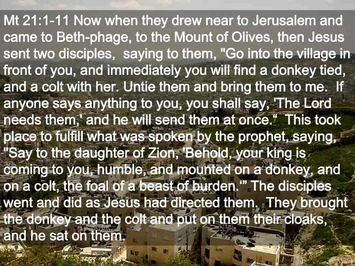 Mt 21:1-11 Now when they drew near to Jerusalem and came to Beth-phage, to the Mount of Olives, then...