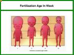 fertilization age in week