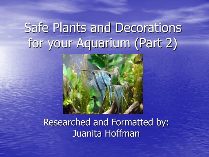 safe plants and decorations for your aquarium part 2 n.