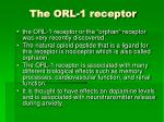 the orl 1 receptor