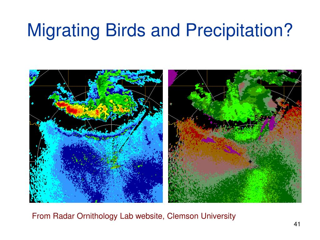 Migrating Birds and Precipitation?