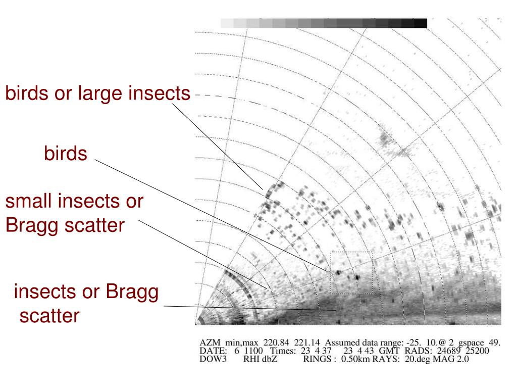 birds or large insects