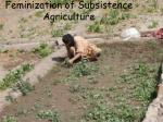 feminization of subsistence agriculture