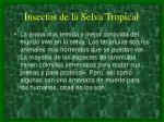 insectos de la selva tropical