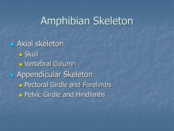 Amphibian Skeleton