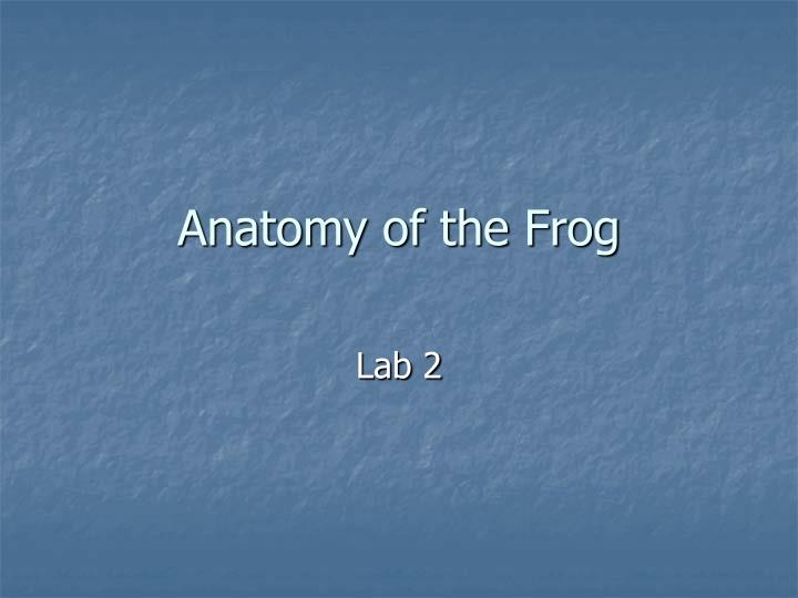 Anatomy of the Frog