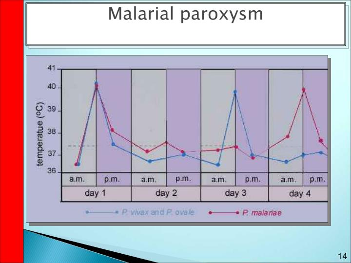 Malarial paroxysm
