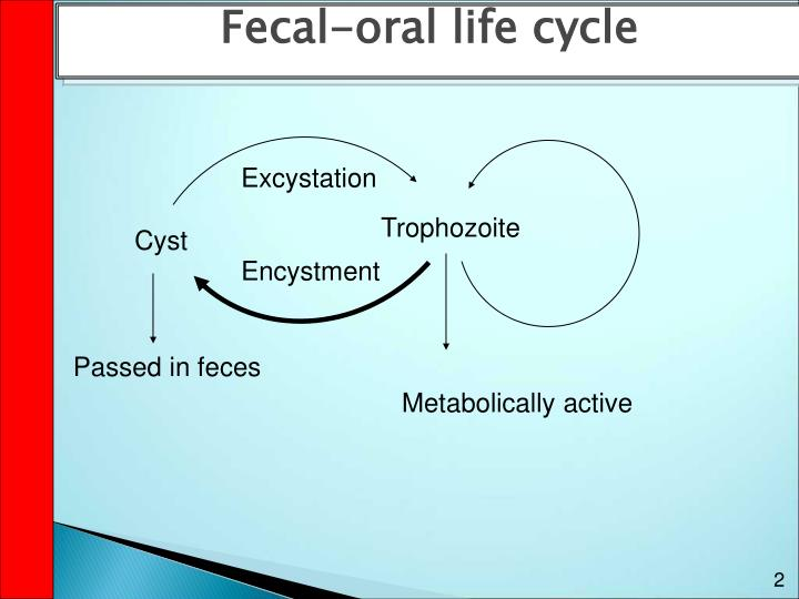 Fecal-oral life cycle