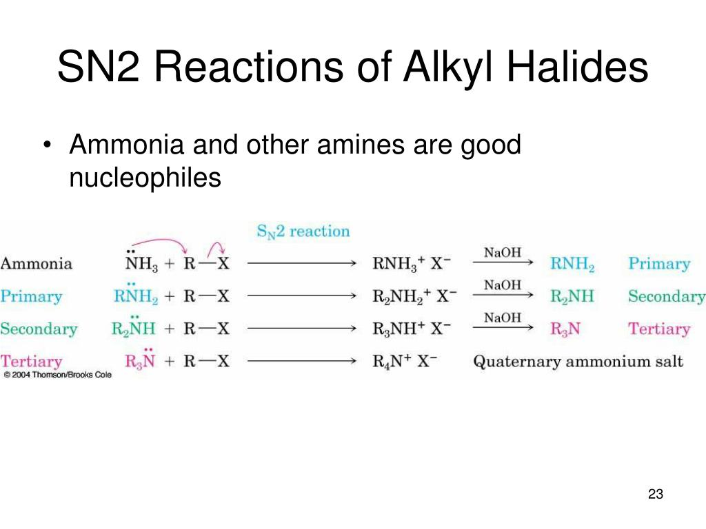 PPT - Chapter 24  Amines PowerPoint Presentation - ID:1200389