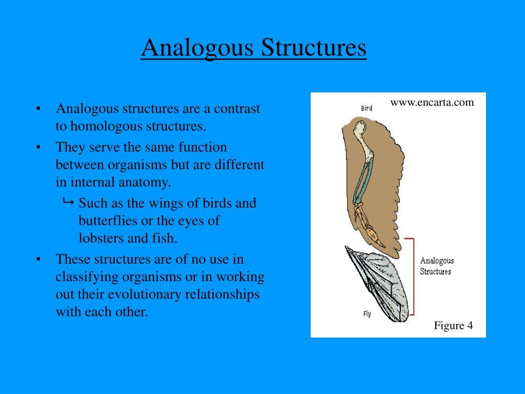 PPT - Evolution Evidence of Evolution PowerPoint ...