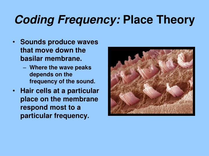 Coding Frequency: