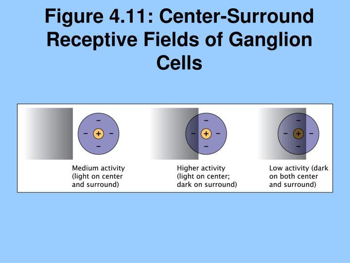 Figure 4.11: Center-Surround Receptive Fields of Ganglion Cells