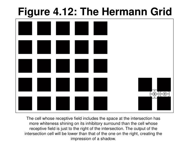 Figure 4.12: The Hermann Grid