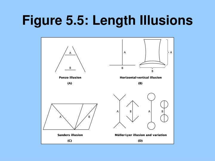 Figure 5.5: Length Illusions