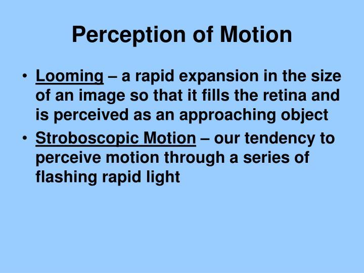 Perception of Motion