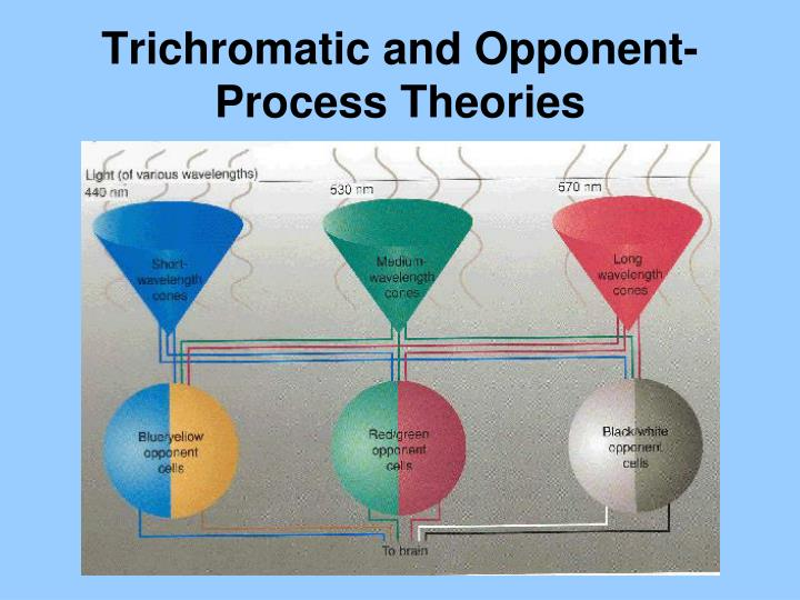 Trichromatic and Opponent-Process Theories