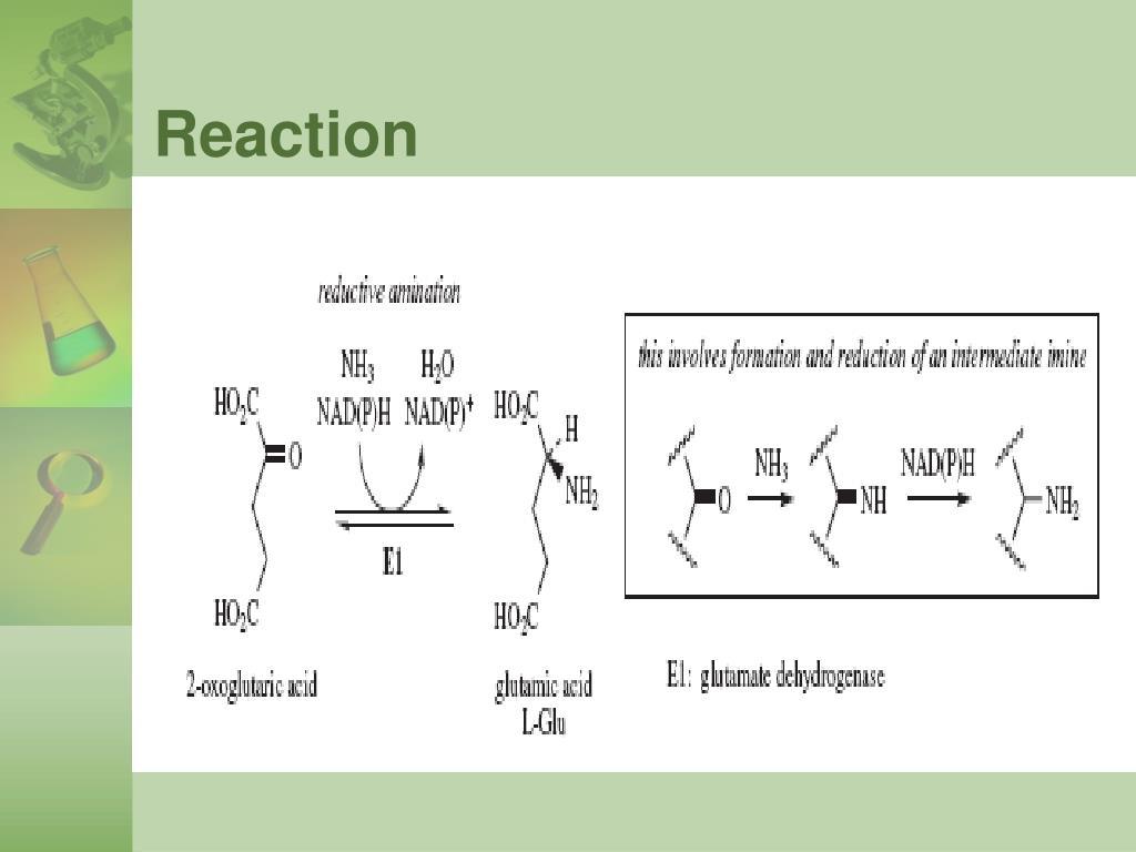 Reaction