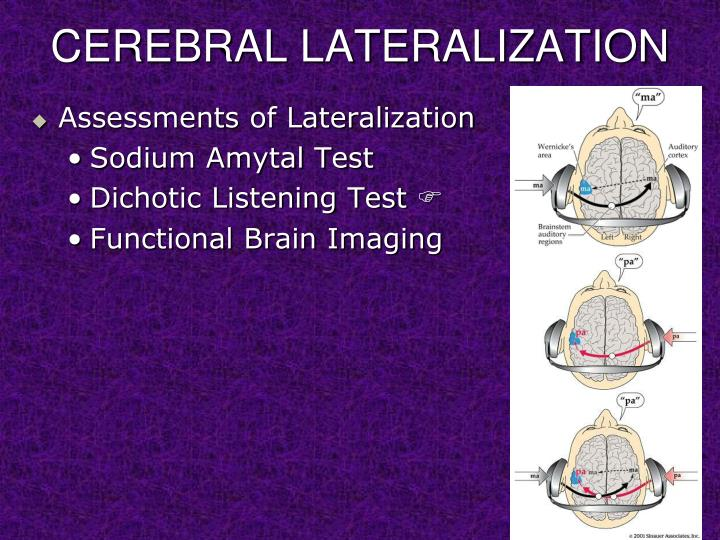 cerebral lateralization and functionality essay A&p chapter 11 nervous system 2 homework cerebral lobes, and functional areas of the cerebral cortex haven't found the essay you want.