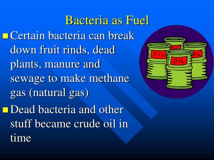 Bacteria as Fuel