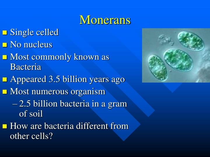 Monerans1