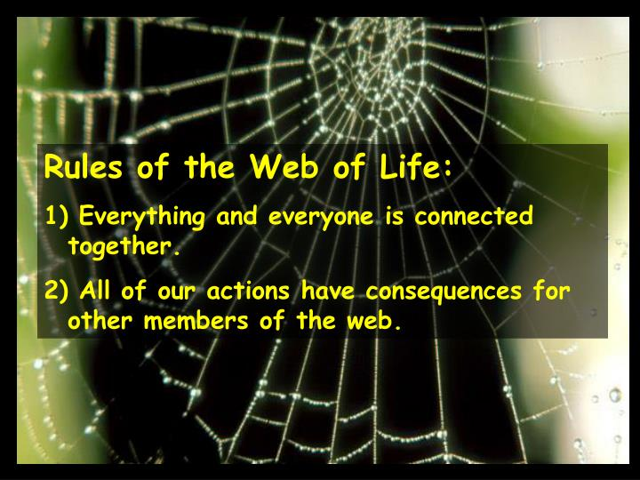 Rules of the Web of Life: