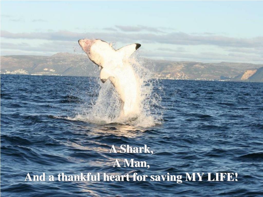 A Shark,