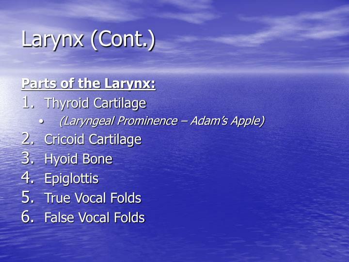 Larynx (Cont.)