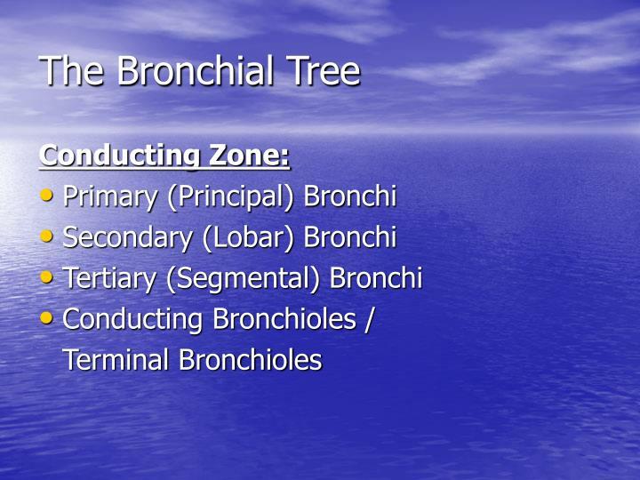 The Bronchial Tree