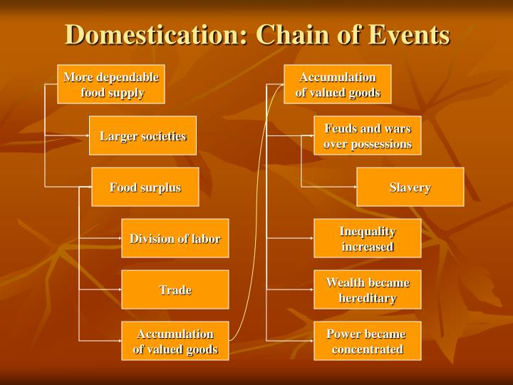 Domestication: Chain of Events
