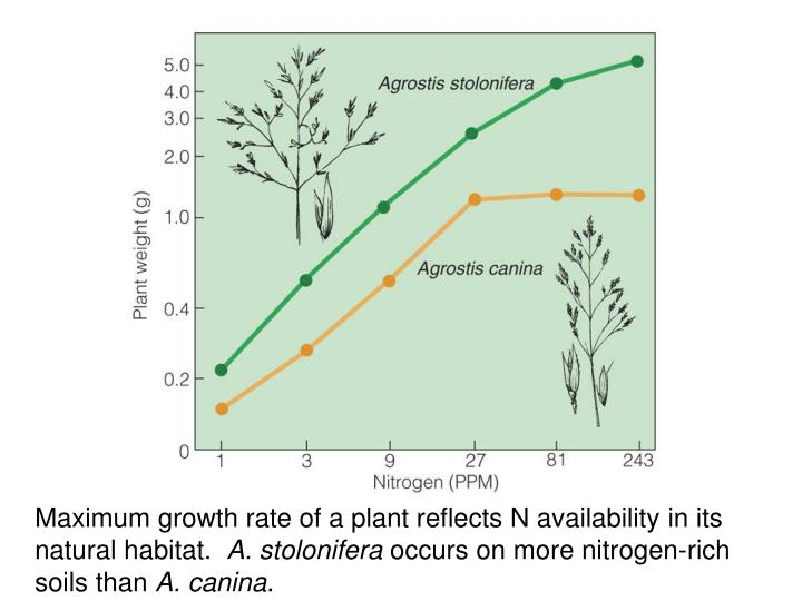 Maximum growth rate of a plant reflects N availability in its natural habitat.