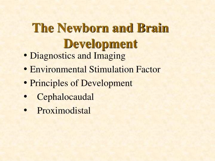 The Newborn and Brain Development