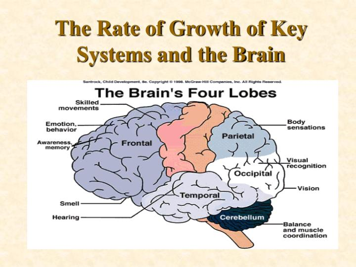 The Rate of Growth of Key Systems and the Brain