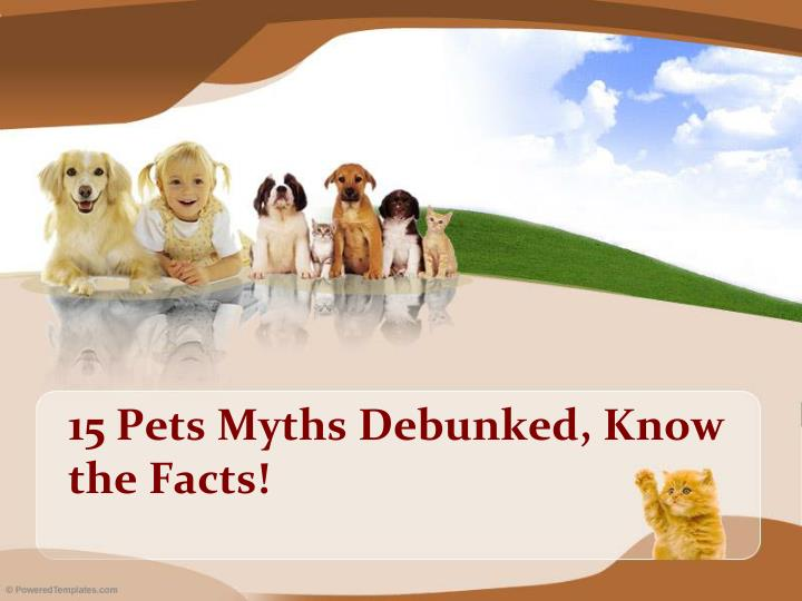 15 pets myths debunked know the facts