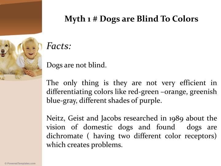 Myth 1 # Dogs are Blind To Colors