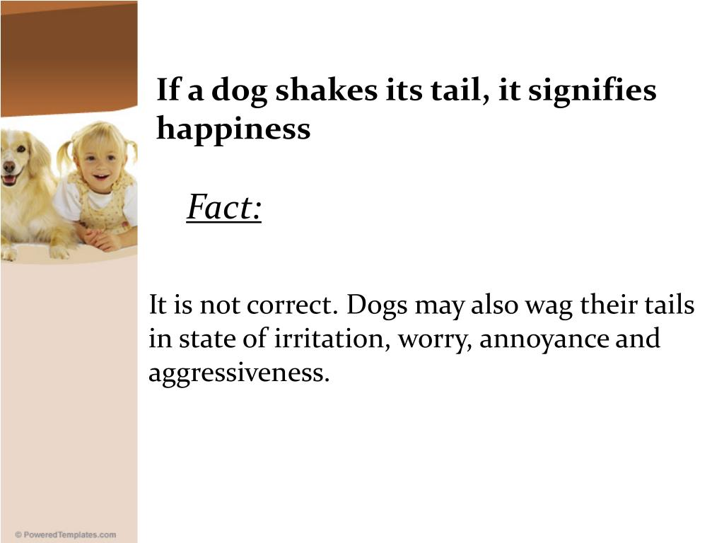 If a dog shakes its tail, it signifies happiness