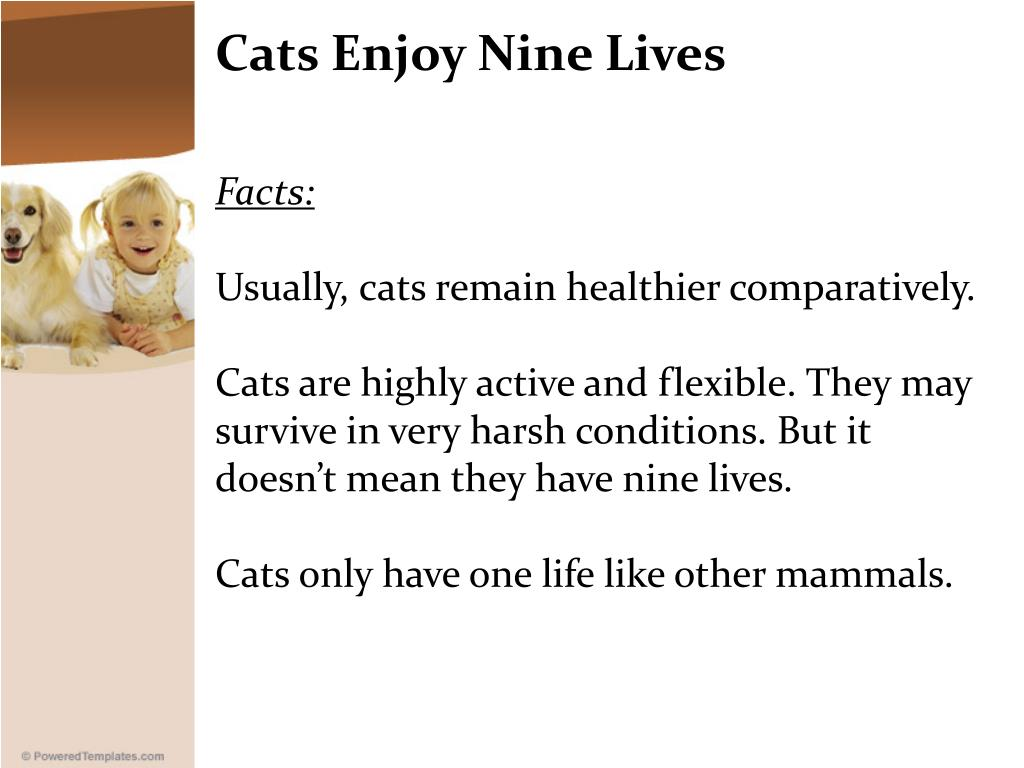Cats Enjoy Nine Lives