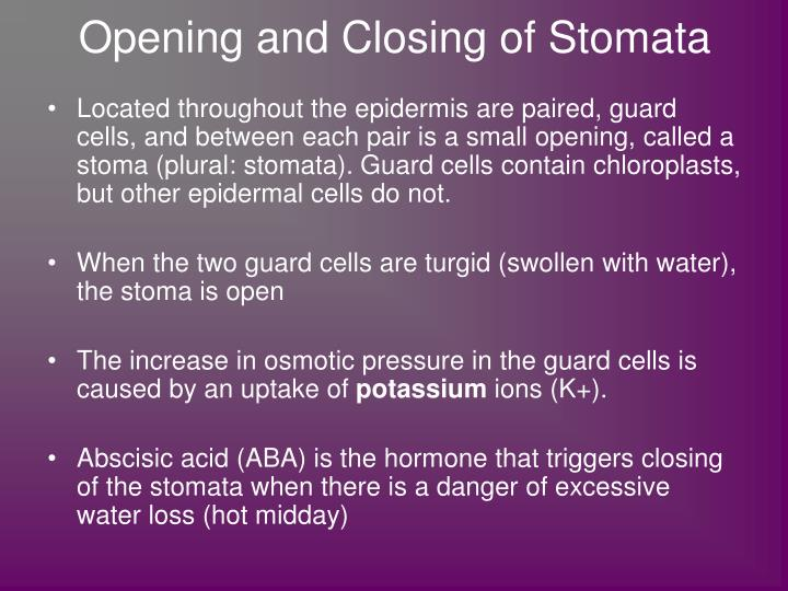 Opening and Closing of Stomata