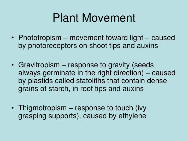 Plant Movement