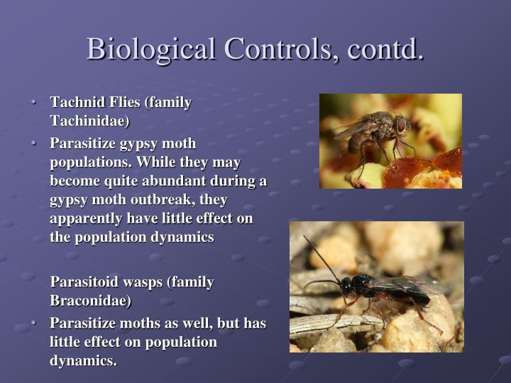 Biological Controls, contd.