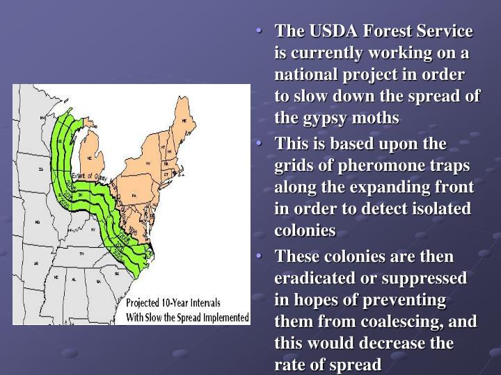 The USDA Forest Service is currently working on a national project in order to slow down the spread of the gypsy moths