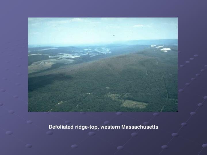 Defoliated ridge-top, western Massachusetts