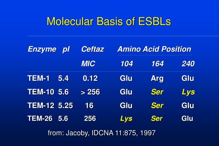 Molecular Basis of ESBLs