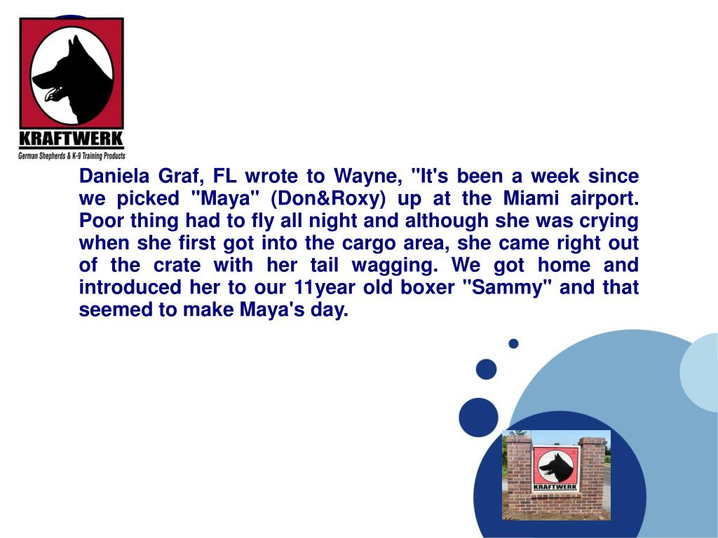 """Daniela Graf, FL wrote to Wayne, """"It's been a week since we picked """"Maya"""" (Don&Roxy) up at the Miami airport. Poor thing had to fly all night and although she was crying when she first got into the cargo area, she came right out of the crate with her tail wagging. We got home and introduced her to our 11year old boxer """"Sammy"""" and that seemed to make Maya's day."""