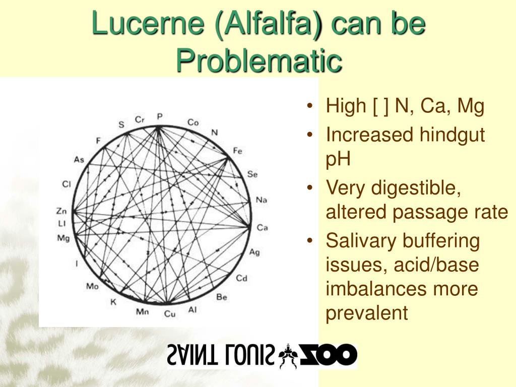 Lucerne (Alfalfa) can be Problematic