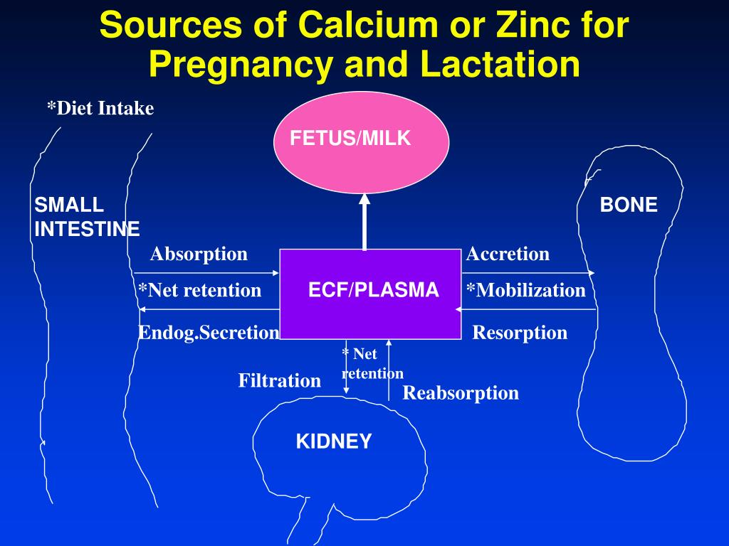 Sources of Calcium or Zinc for Pregnancy and Lactation
