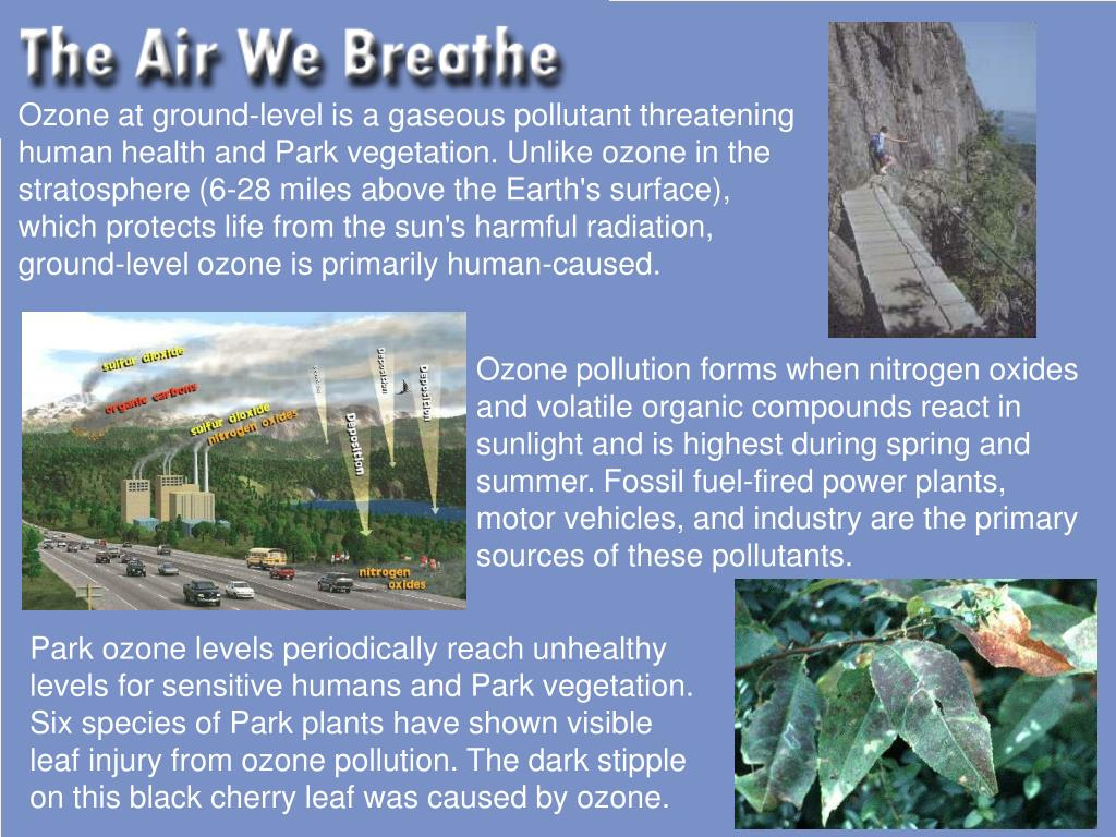 Ozone at ground-level is a gaseous pollutant threatening human health and Park vegetation. Unlike ozone in the stratosphere (6-28 miles above the Earth's surface), which protects life from the sun's harmful radiation, ground-level ozone is primarily human-caused.