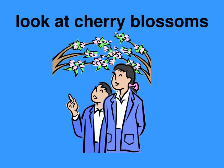 Look at cherry blossoms