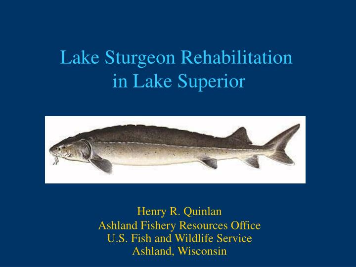 lake sturgeon rehabilitation in lake superior n.
